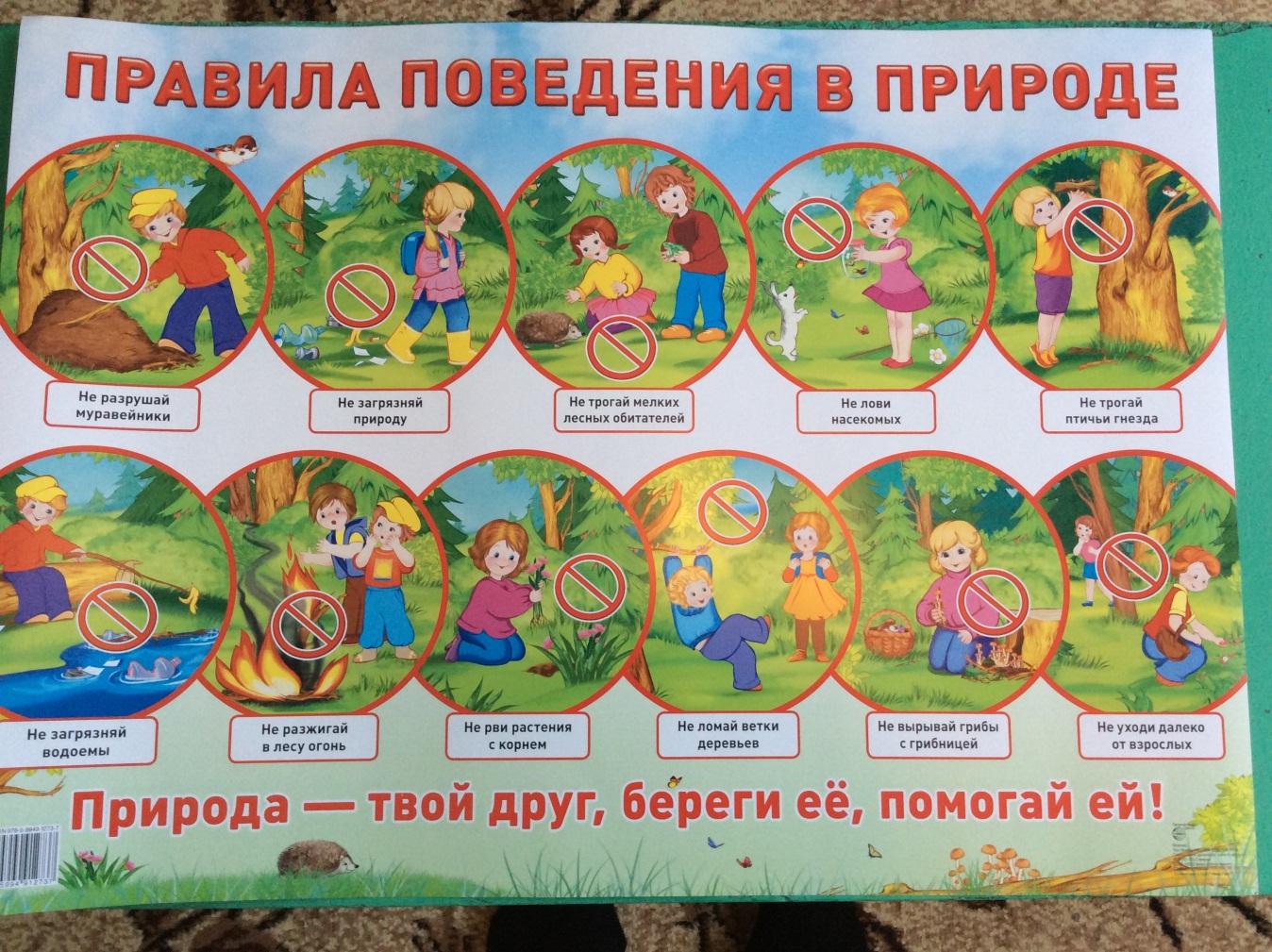 Правила поведения в лесу для школьников картинки